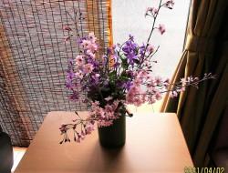 🌸お花見会🌸